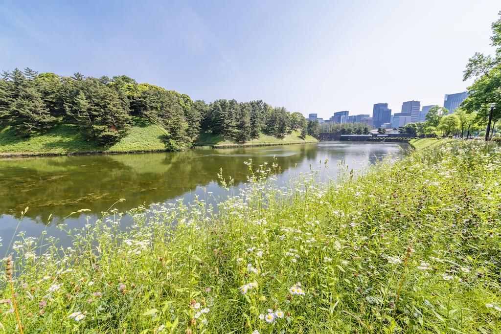 都市部の自然